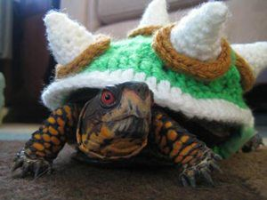 Bowser-Costume-for-a-Turtle