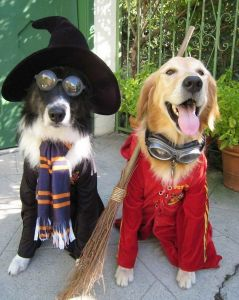 Pets-dressed-up-for-Halloween-239x300