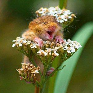 cute-smiling-animals-33-300x300