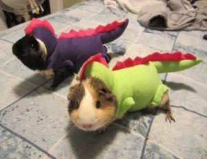 pet-halloween-costume-122__880-300x230