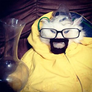 pet-halloween-costume-72__605-300x300